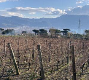 Cantine del Vesuvio Russo Family Winery